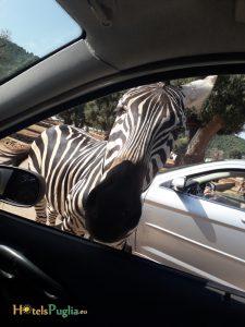 zoo safari puglia