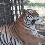 Lo Zoo in Puglia: animali a portata di mano!